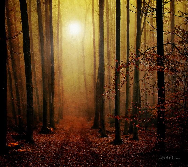 В лесу  печать на холсте, натянут UkrainArt - фото 1