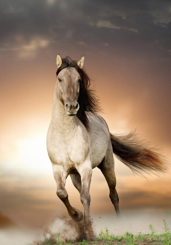 Лошадь  печать на холсте, натянут UkrainArt - фото 1