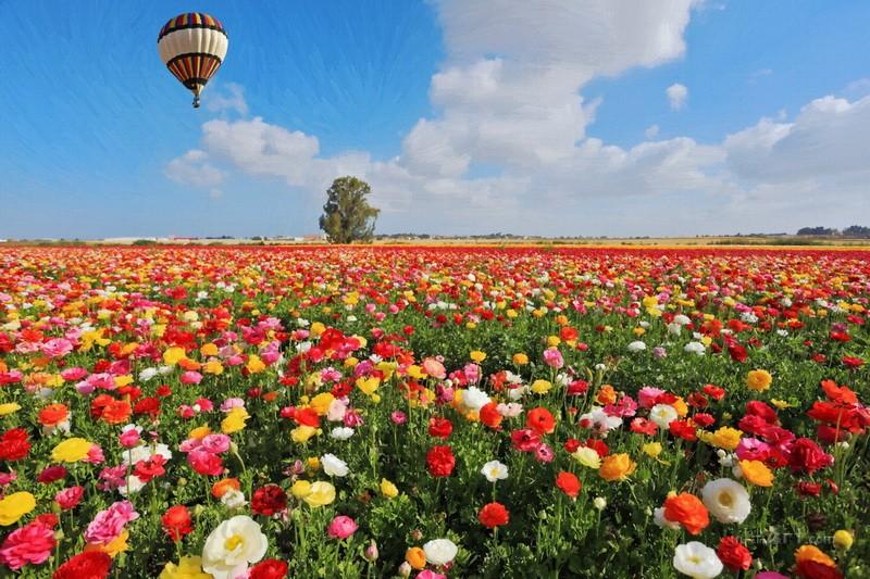 Воздушный шар  печать на холсте, натянут UkrainArt - фото 1
