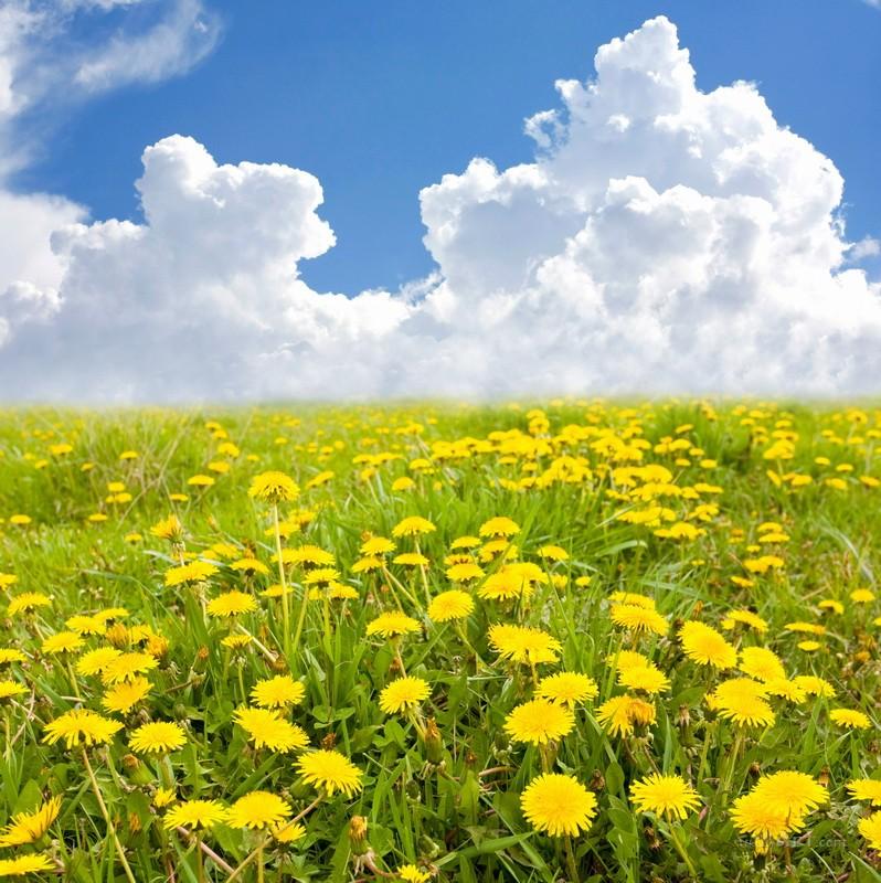 Желтое поле  печать на холсте, натянут UkrainArt - фото 1