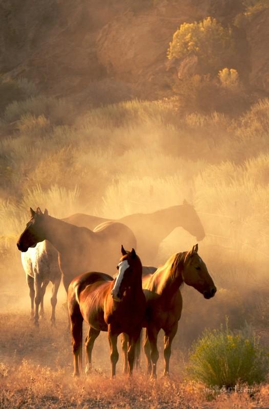 Лошади  печать на холсте, натянут UkrainArt - фото 1