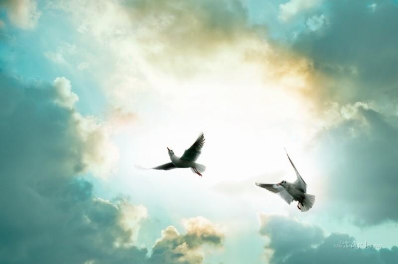Птицы в небе  печать на холсте, натянут UkrainArt - фото 1
