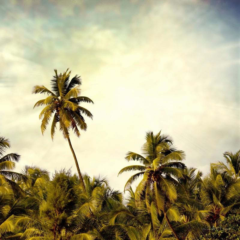 Остров и пальмы  печать на холсте, натянут UkrainArt - фото 1