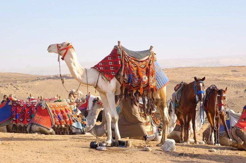 В пустыне  печать на холсте, натянут UkrainArt - фото 1