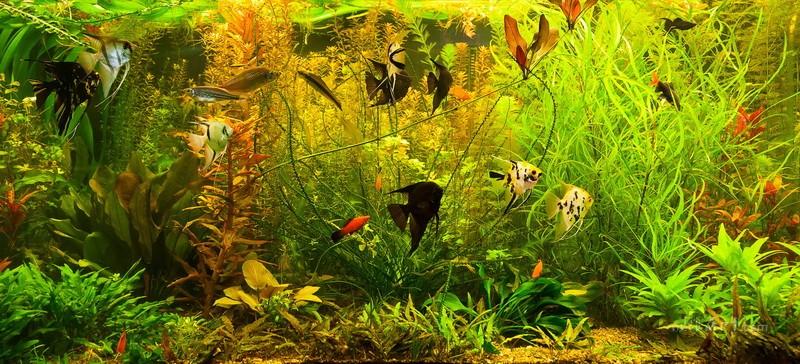 В аквариуме  печать на холсте, натянут UkrainArt - фото 1