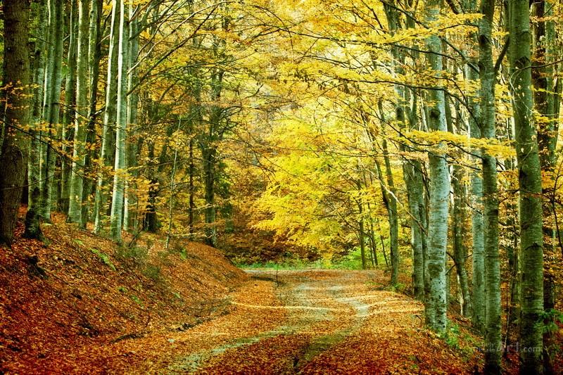 Осень  печать на холсте, натянут UkrainArt - фото 1