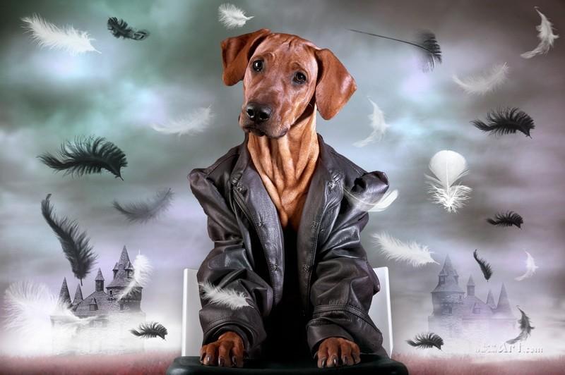 Бизнес-пес  печать на холсте, натянут UkrainArt - фото 1