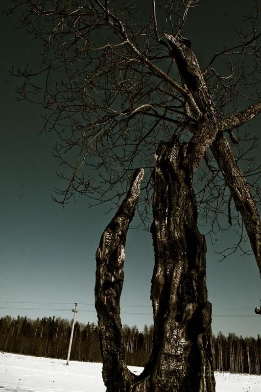 Одинокое дерево  печать на холсте, натянут UkrainArt - фото 1