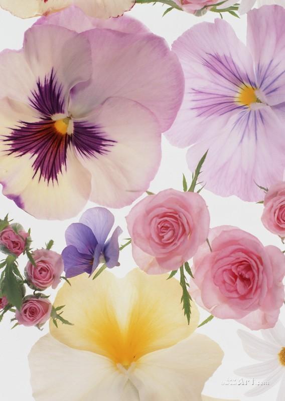 Цветы  печать на холсте, натянут UkrainArt - фото 1