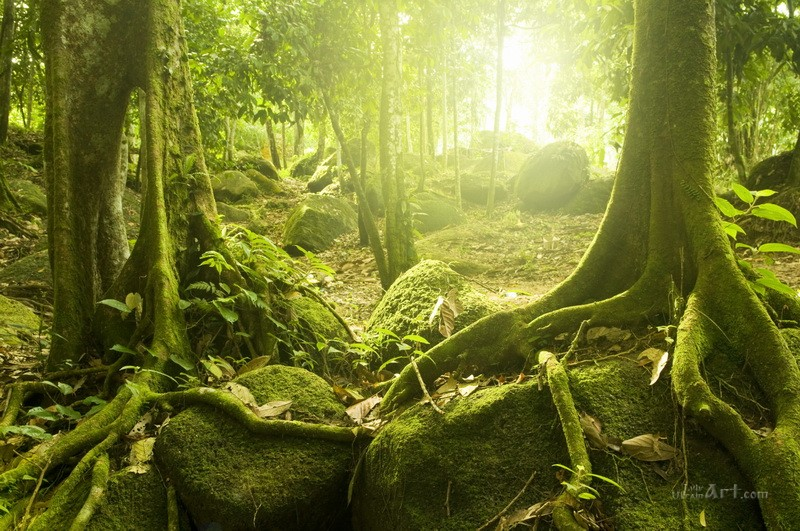 Таинственный лес  печать на холсте, натянут UkrainArt - фото 1
