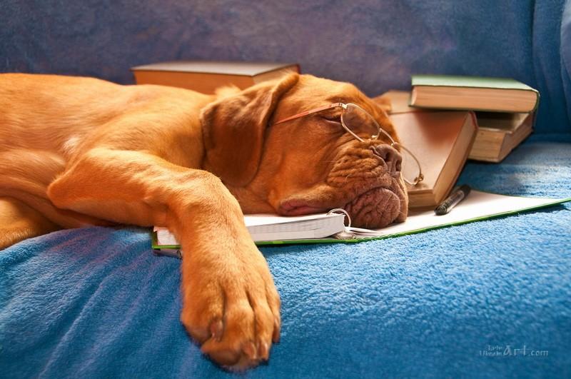 Спящий пес  печать на холсте, натянут UkrainArt - фото 1