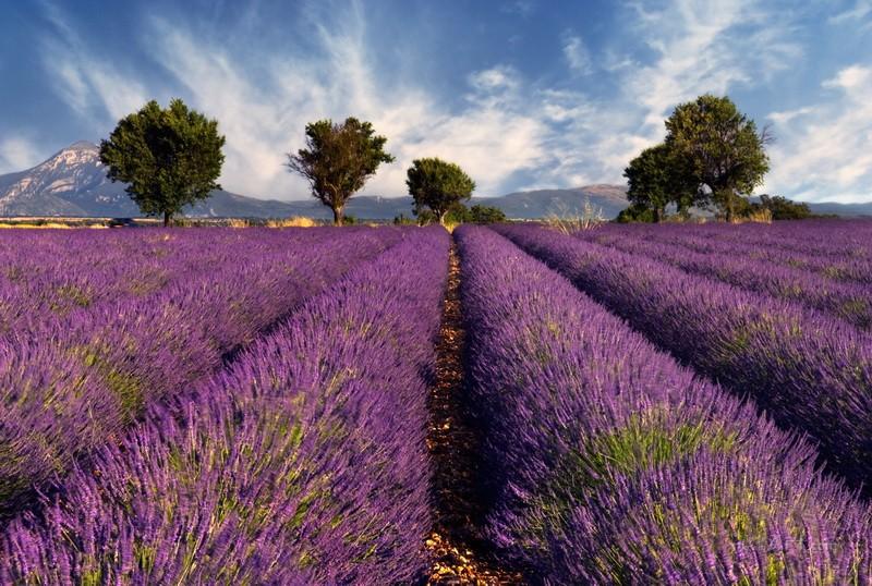 Фиолетовый пейзаж  печать на холсте, натянут UkrainArt - фото 1