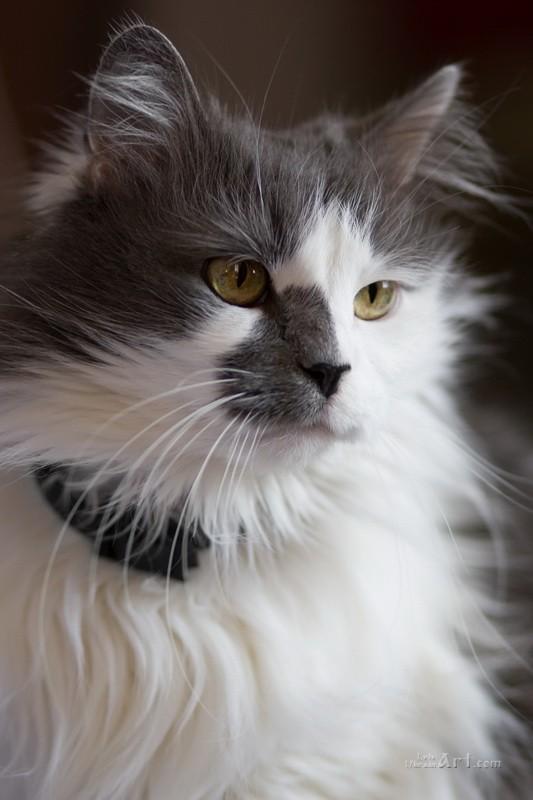 Кошка  печать на холсте, натянут UkrainArt - фото 1