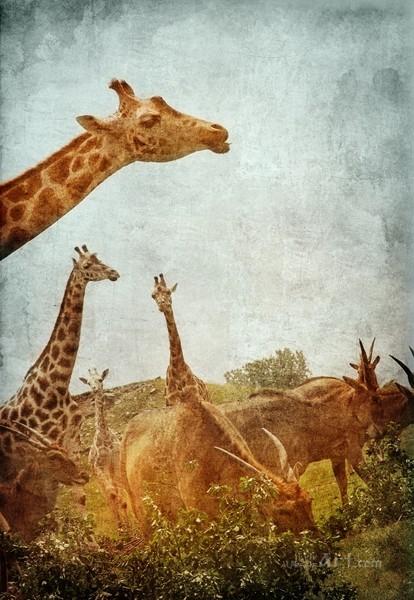 Африка  печать на холсте, натянут UkrainArt - фото 1