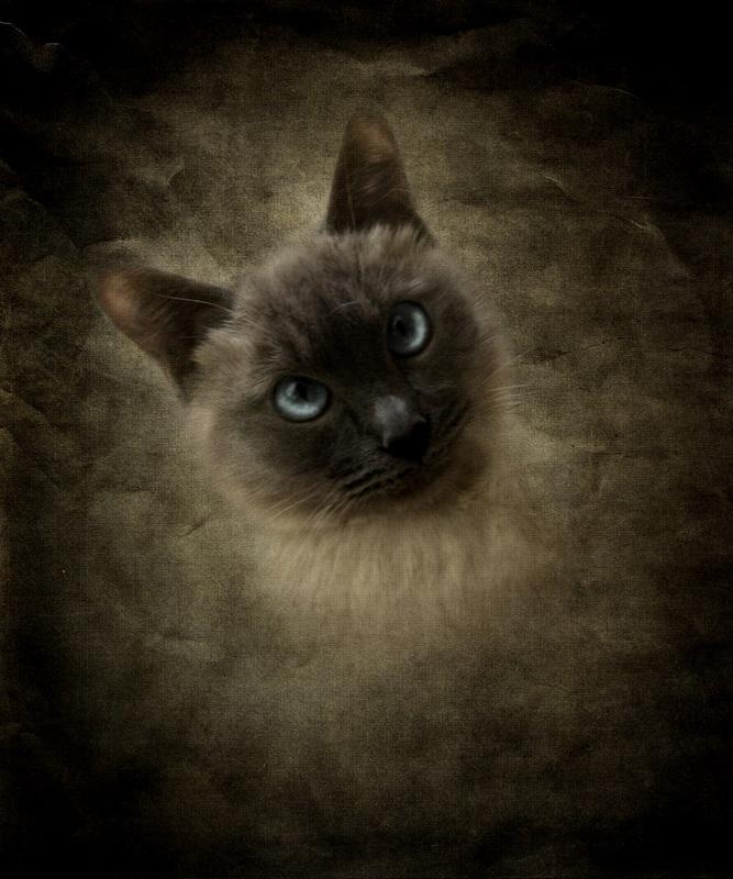 Кіт  друк на полотні, натягнут UkrainArt - фото 1