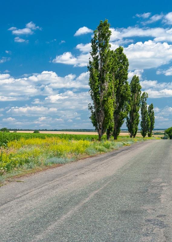 По дороге в украинскую деревню №1  печать на холсте, натянут UkrainArt - фото 2