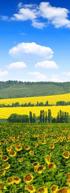 Весенний пейзаж с подсолнухами №2  печать на холсте, натянут UkrainArt - фото 2