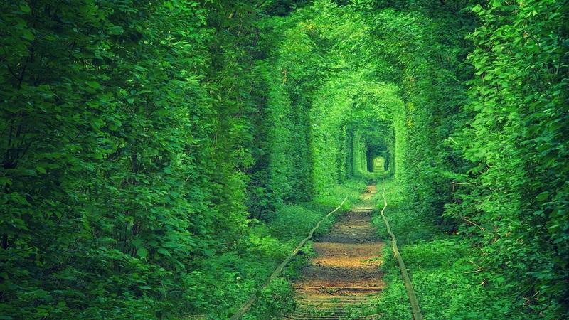 Тоннель влюбленных  печать на холсте, натянут UkrainArt - фото 1