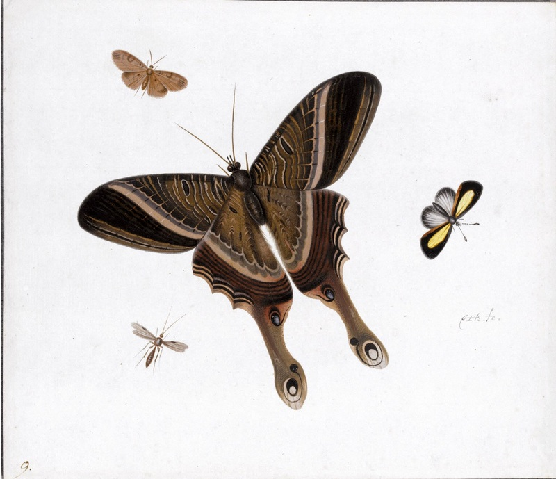 Три бабочки и комар  печать на холсте, натянут Хенстенбург Герман - фото 1