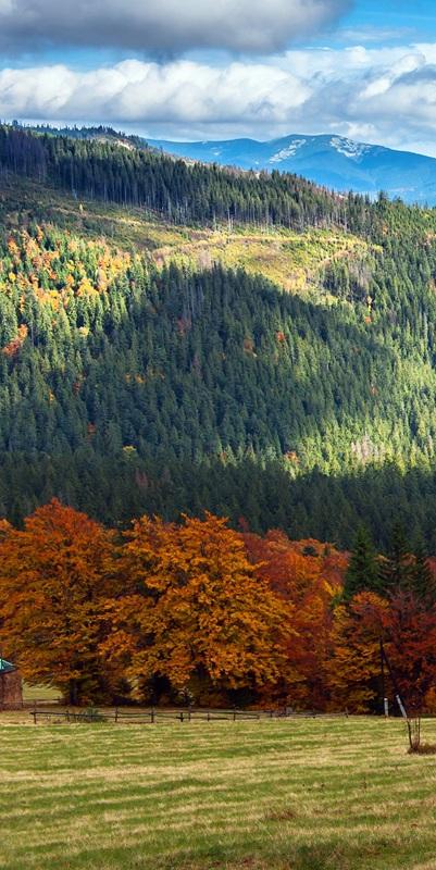 Карпаты осенью №1  печать на холсте, натянут UkrainArt - фото 2