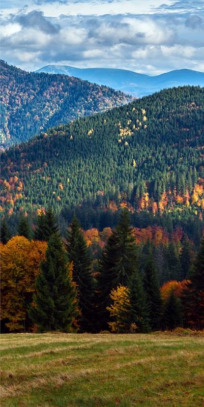 Карпаты осенью №1  печать на холсте, натянут UkrainArt - фото 4