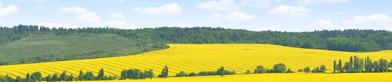 Весенний пейзаж с подсолнухами №1  печать на холсте, натянут UkrainArt - фото 3