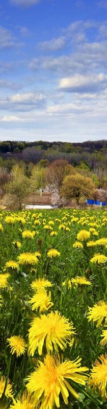 Старая мельница №1  печать на холсте, натянут UkrainArt - фото 2